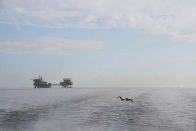 Gulf Mist