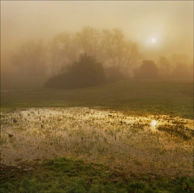 Dawn over the Wetlands