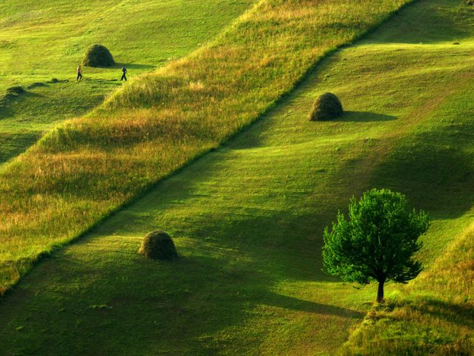 Meadow afternoon by nevesincs - Earth Day 2017 Photo Contest