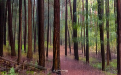 Artistic Forest