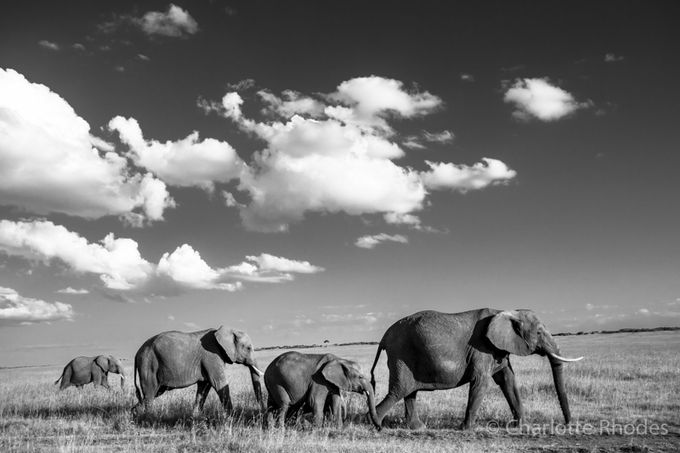 Follow The Leader by charlotterhodes - Animals In Black And White Photo Contest