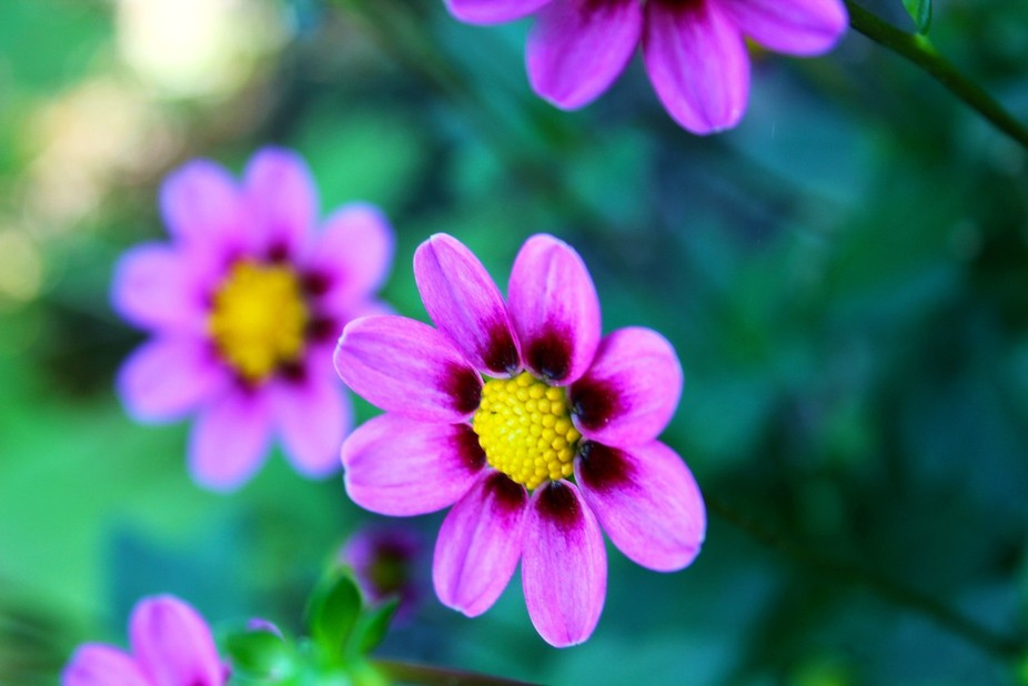 Lovely pink flowers !