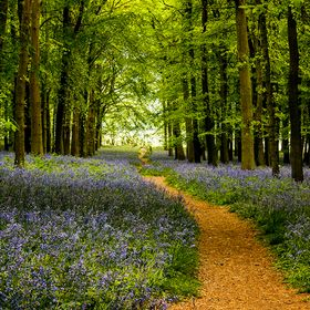 Taken during a trip to Bedfordshire Bluebell Woods