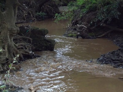Downstream water flow.