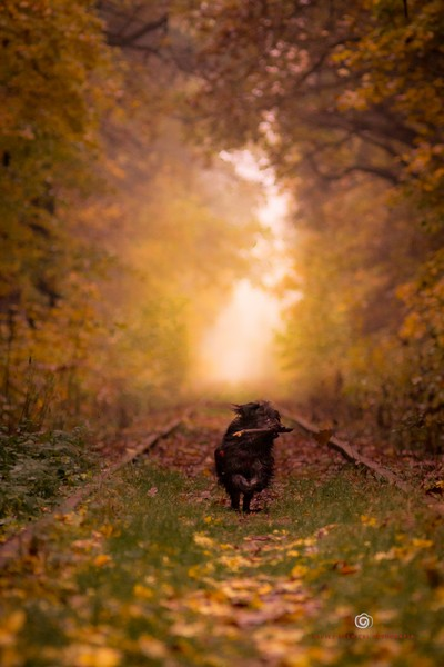 Autumn Doggy