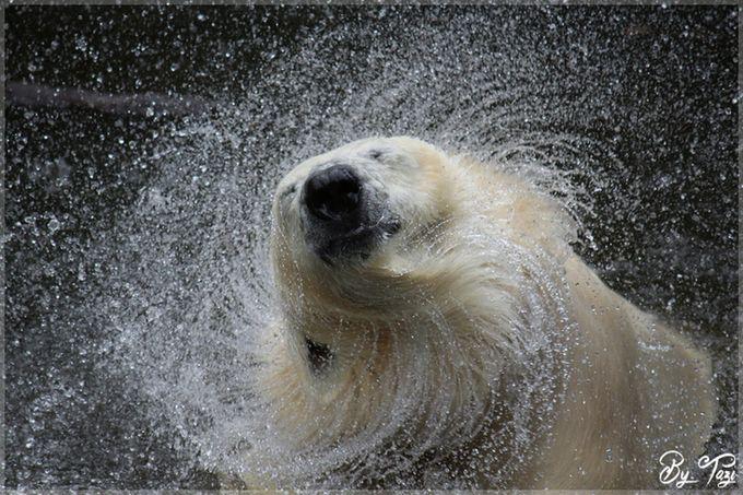 Splashing by Tazi - Animals And Water Photo Contest