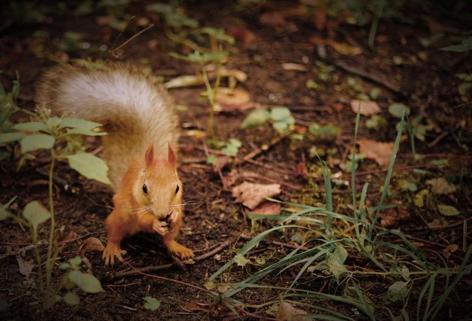 Wildlife in Moscow-Gorky Park