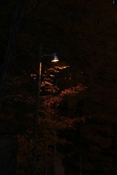 Tree under Lamppost