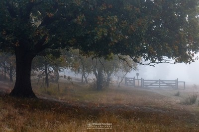 Gate Into The Fog