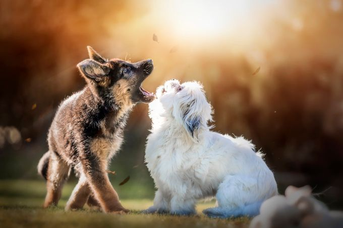 Sing!! by jennycameron - Kittens vs Puppies Photo Contest