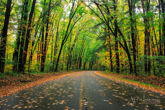 Colors of Fall by jpwaldron - The Nature Lover Photo Contest