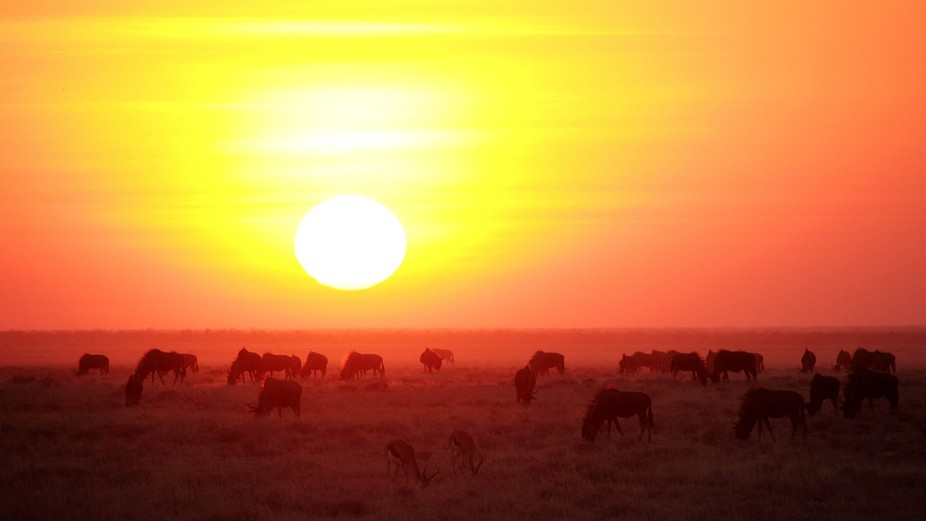 A herd of wildebeests and a couple of cheeky springboks grazing, unimpressed by the spectacular s...
