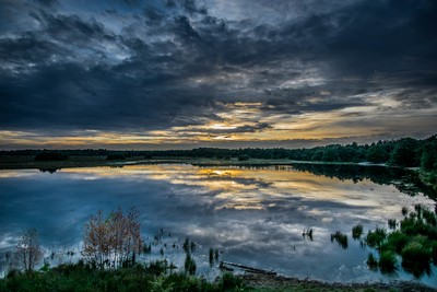Marshland Reflections
