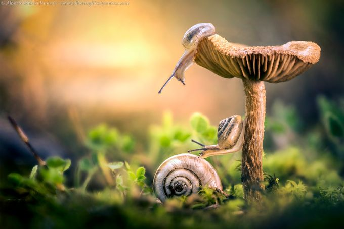 The awakening of snails by albertoghizzipanizza - Mushrooms Photo Contest