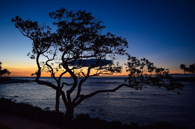 Sunset Silhouette by JoeyJ - Tree Silhouettes Photo Contest