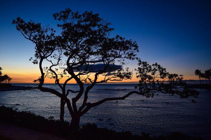 Sunset Silhouette by JoeyJ - Tree Silhouettes Photo Contest