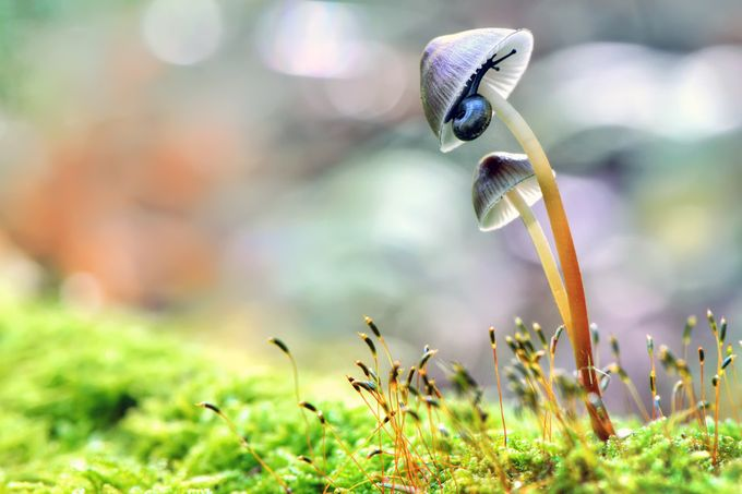 Home sweet home by Prijaznica - Mushrooms Photo Contest