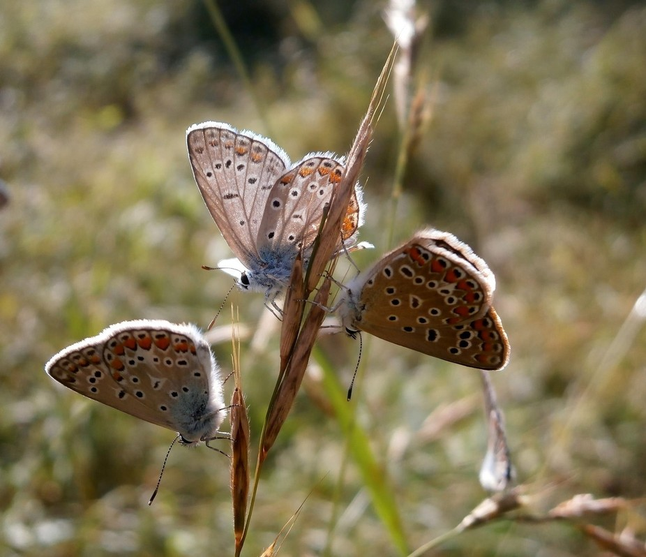 On a late afternoon we were relaxing by the river in Romania and I saw these butterfly, I felt th...