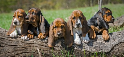 Puppies on a Log