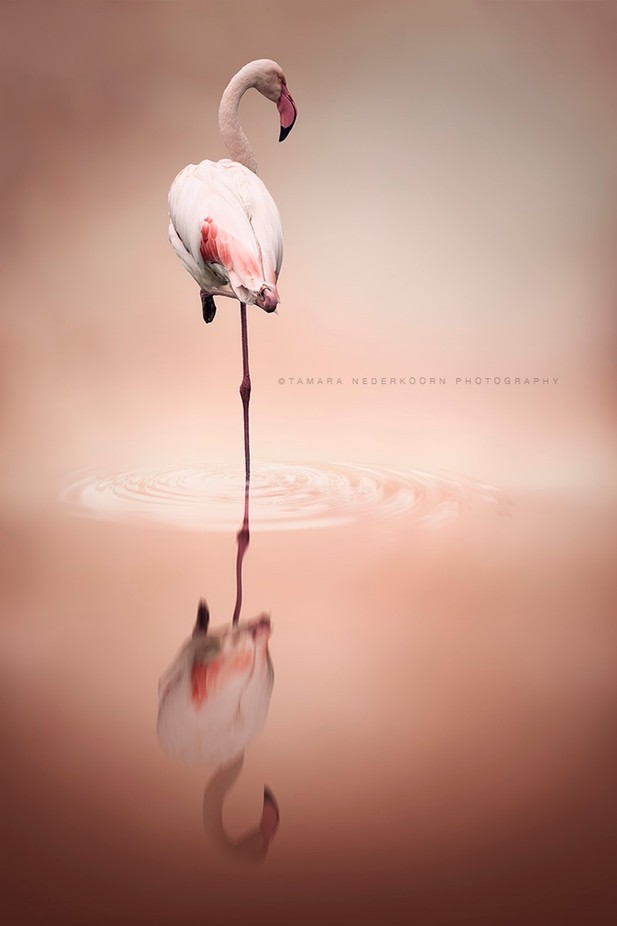 © Natural fotografie by Tamara Nederkoorn by Natural-fotografie - Animals And Water Photo Contest