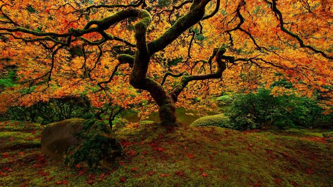 Flame of Autumn by brandtcampbell - Orange Is The Color Photo Contest