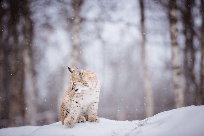 Iben by MariLaegreid - Animals In The Winter Photo Contest