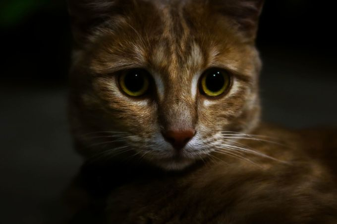 Cats Eyes by sallygravener - Feline Beauty Photo Contest