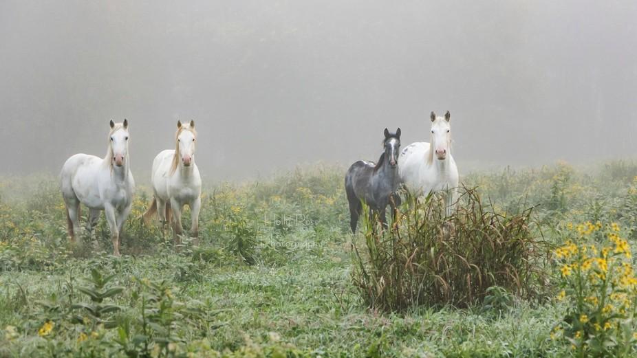 Wild horses near Eminence, MO.  Taken 10-22-16