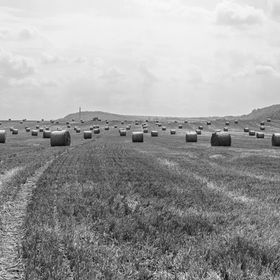harvest time - straw bales in a field - bw