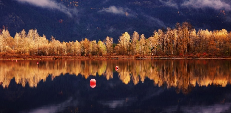Reflection of the trees surrounding One Mile Lake in beautiful Pemberton, BC.