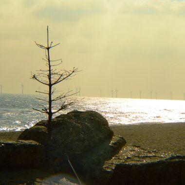 Lone tree on a beach.