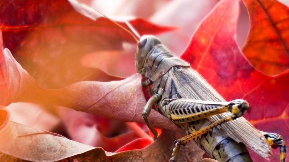 Autumn Leaves Part 4 ft. new friend