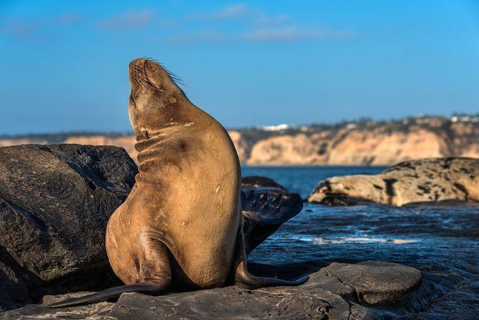 Big Stretch by RichardReames - Celebrating Nature Photo Contest Vol 3