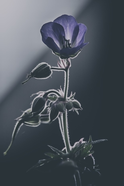 The shadow flower