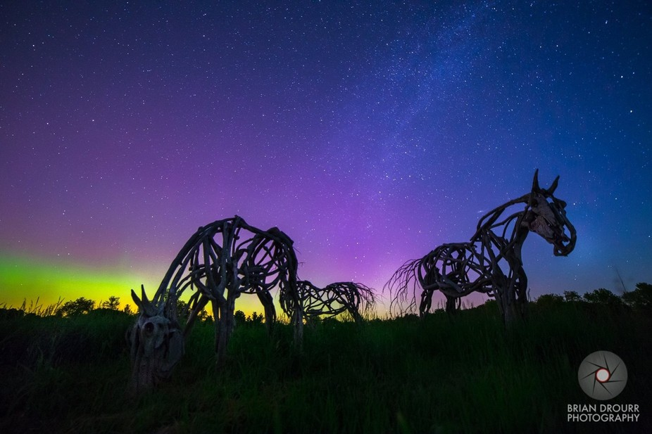 Three of the Ann Zoltas Clark Horse sculptures in South Hero Vermont under the purple and green a...