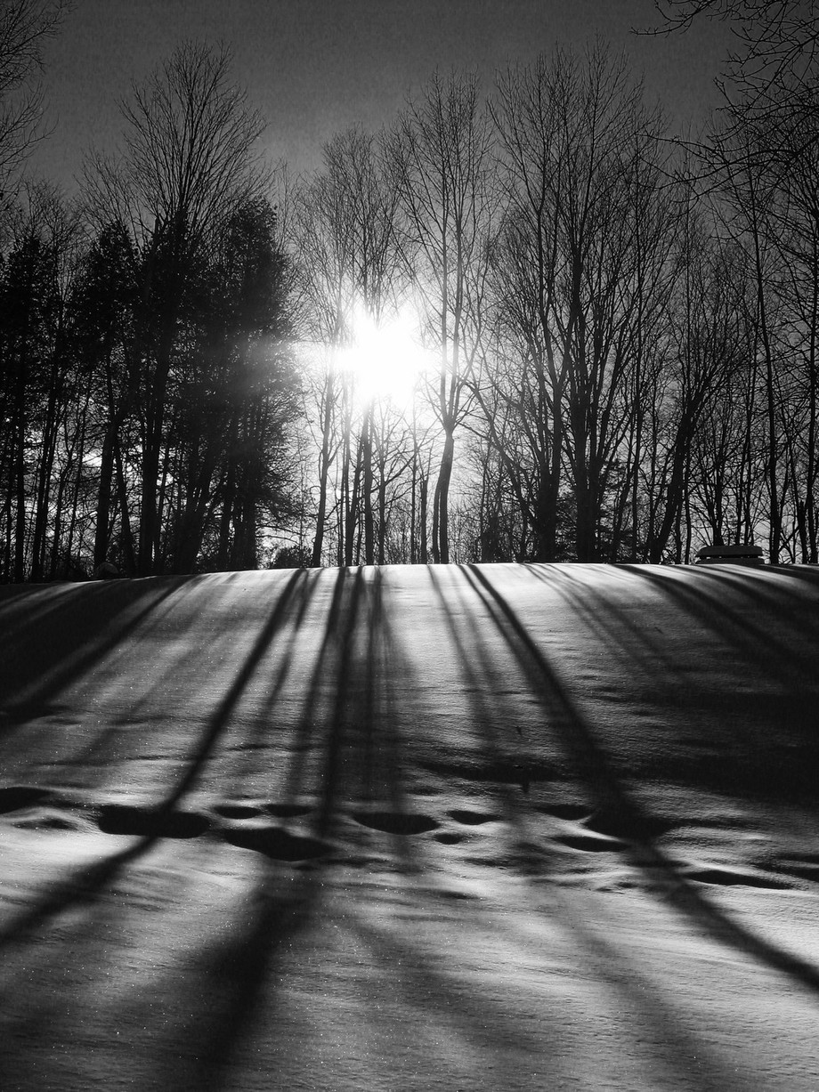 Shadowy Trees by rabjaffar - Landscapes In Black And White Photo Contest