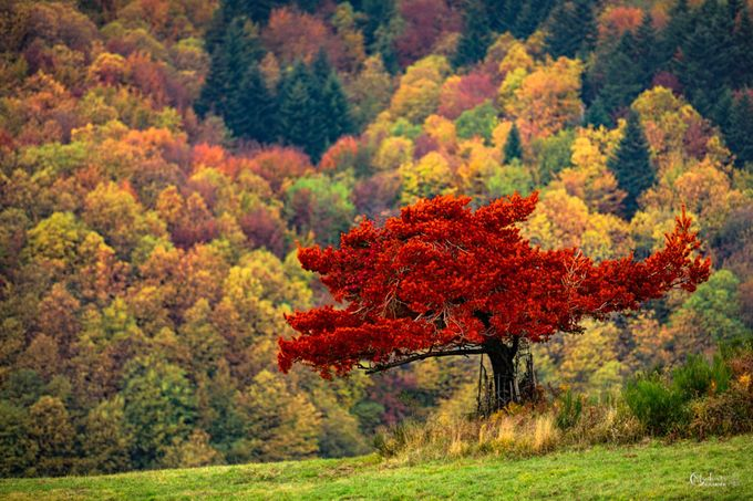 Warm autumn colors by GiovanniModesti - It Is Red Photo Contest