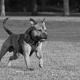 Jax on the run