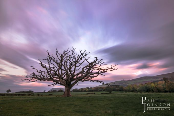 the dead tree by pauljoinson - A Lonely Tree Photo Contest