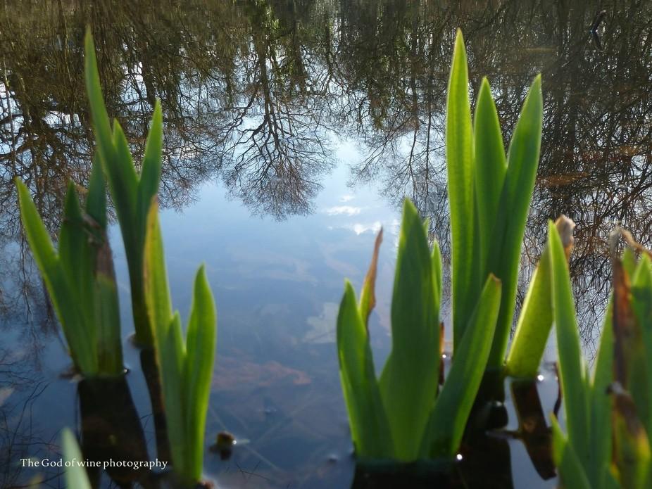 Pillars of reflection