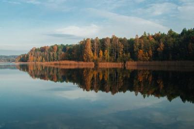 symmetrical autumn