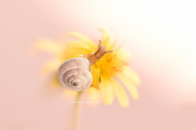 Little Miss Sunshine by PriscilaOctavianaBadalut - My Best Shot Photo Contest Vol 2