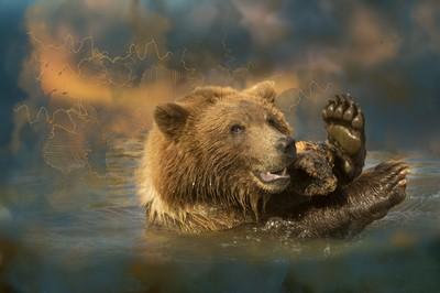 Bella, Montana Grizzly Encounter Bear