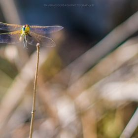 Happy dragonfly in Ibiza