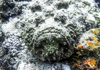 Unhappy Stone Fish