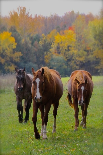 Tasha, Rosie and Remi......Coming to Say Hello