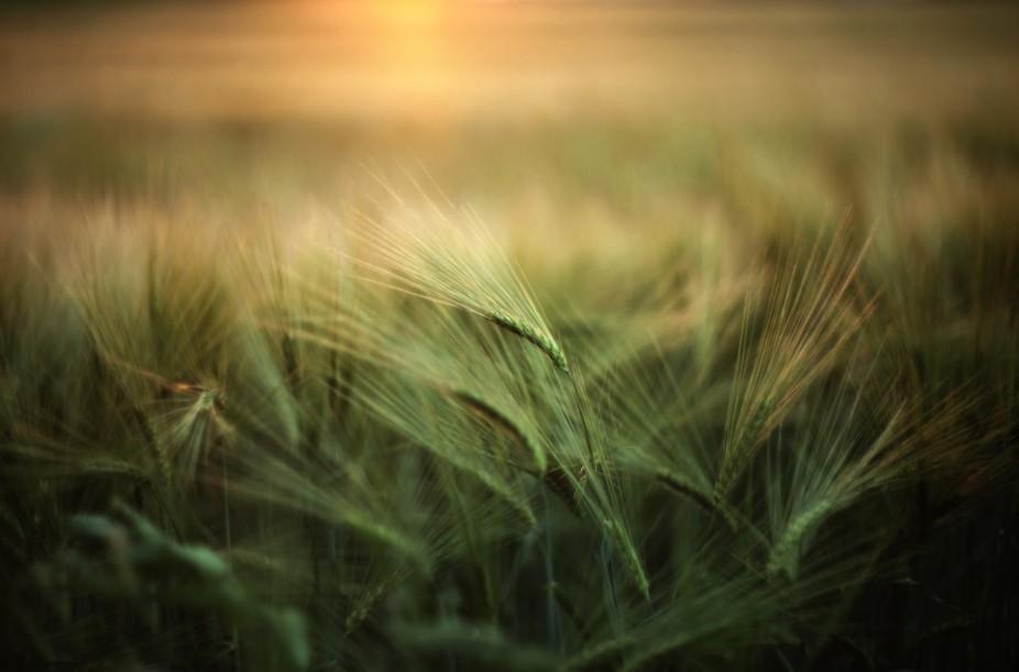 stock-photo-summer-sunset-130390469