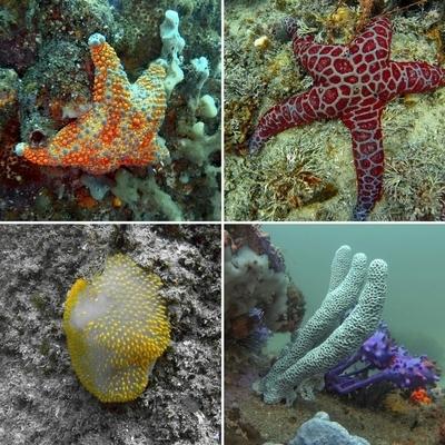 Underwater peizaj