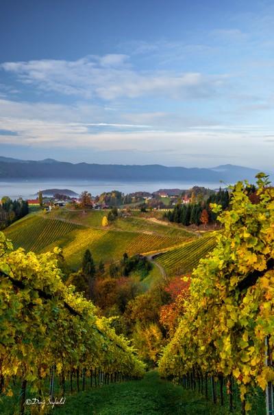 Sunrise in the Vineyards