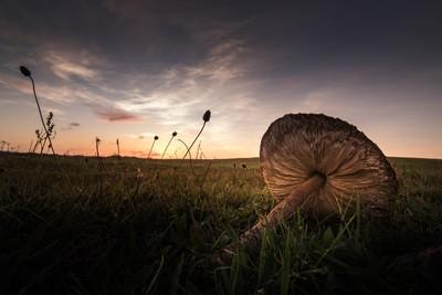 A fallen mushroom